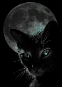 gata luna